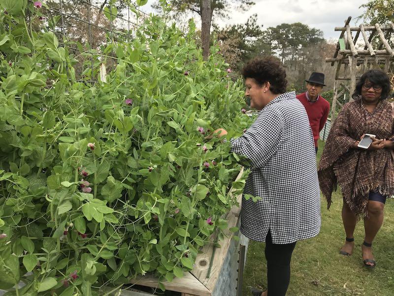 Rosie Davidson master gardener of Farm Chastain
